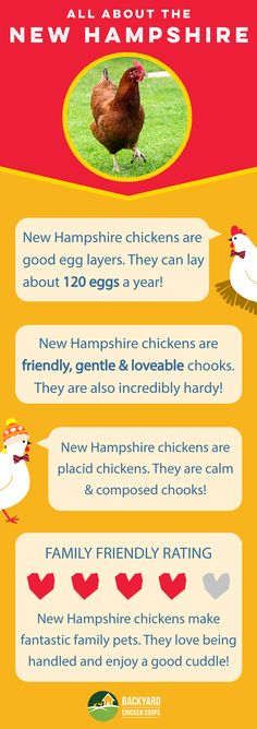 New Hampshire chickens are an all round awesome breed! They are kind, friendly, docile chickens that would make a great addition to any backyard flock. Check out their breed profile here, http://www.backyardchickencoops.com.au/breed-profile-new-hampshire/   #loveyourchickens #infographic #newhampshirechickens