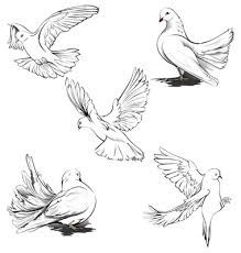 how to draw a realistic dove ile ilgili görsel sonucu