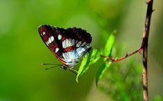 Pillangó a falevélen háttérkép képeslap