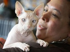 A four-year-old hairless cream point Sphynx cat named Moshe Moshi is held by her owner Carol Meir at The Big Bad Woof, a pet supplies store, in Washington. Meir is managing her cat's allergies with a venison and pork diet and daily medication. Ugly Animals, Cute Animals, Funny Looking Cats, Ugly Cat, Cat Allergies, Pet Supply Stores, Sphynx Cat, Animal 2, Pictures Of The Week