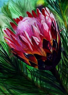 Protea print tropical flower pink hot pink red by kauaiartist Protea Art, Protea Flower, Tropical Flowers, Hawaiian Flowers, Watercolor Flowers, Watercolour, Rare Flowers, Flowering Trees, Pictures To Paint