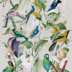 Tropical Birds by Mind the Gap - White / Multi - Mural : Wallpaper Direct Estilo Tropical, Tropical Style, Tropical Birds, Exotic Birds, Colorful Birds, Luxury Wallpaper, Modern Wallpaper, Of Wallpaper, Designer Wallpaper