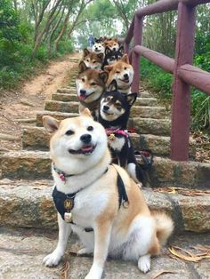 A stairway to Puppies!