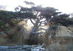 El viejo árbol de la vida  Nos hemos encontrado esta fotografía que podría simbolizar la lucha por la existencia de todos los seres vivos.  El árbol ha perdido el suelo pero se sigue aferrando a la vida en un equilibrio imposible.