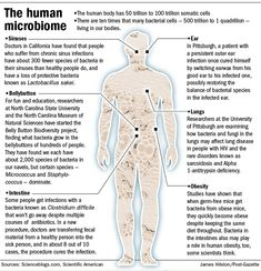 Bacteria inside us studied as key to health | The Human Microbiome | February 10, 2013 12:20 am | By Mark Roth / Pittsburgh Post-Gazette