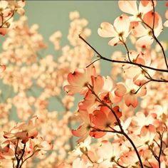 And Spring Arose on the Garden Fair Flower by joystclaire.