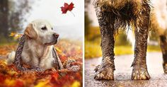 Autumn Dog: Me And My Golden Retriever Love This Time Of The Year | Bored Panda