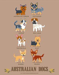 Austrailian Dogs