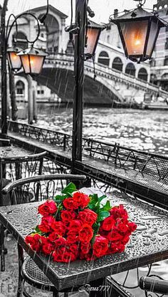 Red roses for a rainy day in Venice, Italy. It is still one of the most romantic places on earth rain or no rain. Color Splash, Color Pop, Oil Painting On Canvas, Diy Painting, Painting Abstract, Beautiful Places, Beautiful Pictures, Rose Pictures, Beautiful Scenery