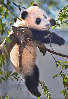 Funny Wildlife, Branching out by Stinkersmell on Flickr....