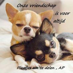 Vriendschap plaatje 8