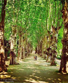 Fonds+d'écran+Nature+>+Fonds+d'écran+Arbres+-+Forêts+tonnelle++par+issam-debeche+-+Hebus.com Golf Courses, Images, Nature, Naturaleza, Nature Illustration, Off Grid, Natural