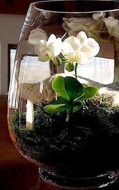 The Fern and Mossery: Phalaenopsis Terrarium