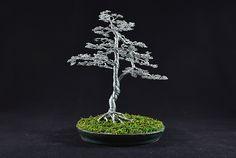 large silver upright bonsai . www.bonsire.wordpress.com