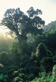 Knysna's temperate rain forest.