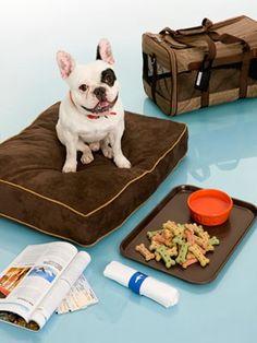 Fuzzy Frenchie Ready to Go!