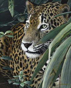 Natural Instinct - Jaguar 300 sm A