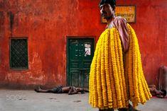 Marigold Garlands - Marigold flower garlands seller in a street of Calcutta, West Bengal, India. Marigold Flower, West Bengal, Flower Market, Kolkata, My Favorite Color, True Colors, Cool Photos, Fine Art Prints, Flower Garlands