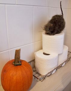 Toilet paper decorated for Halloween at The Creek Line House: A Semi-Spooky Halloween Home Tour!