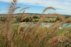 Countdown to Fall Foliage at Hurst House Bed & Breakfast, Ephrata PA.
