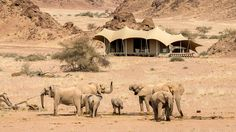 Enjoy 2 nights at the exclusive Hoanib Skeleton Coast Camp on our 10 Day Luxury Namibia Safari Slow Travel, Travel Companies, African Elephant, Luxury Travel, Habitats, Safari, National Parks, Wildlife, Coast