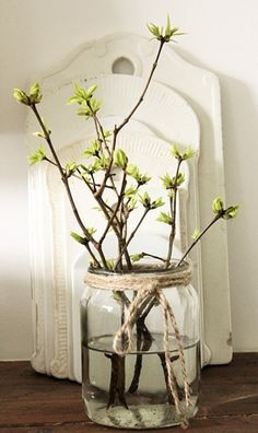 Spring shoots in a decorative glass vase. #Spring, #green