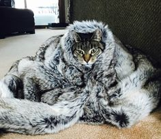 The Kitty of the North! http://ift.tt/2r4pii1