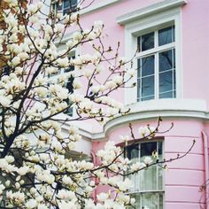 pink townhouse & blossoming trees