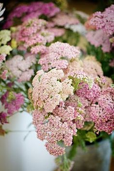 Autumn Joy Sedum.... I grow this in my garden and it's lovely. This beautiful picture doesn't even do it justice!