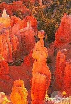 Thor's Hammer Bryce Canyon, Utah