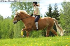 Finnhorse gelding Vilppulan Vilu Mane N Tail, Draft Horses, Palomino, Horse Breeds, Finland, Porn, Animals, Inspiration, Biblical Inspiration