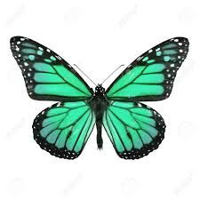 Resultado de imagen para mariposas monarcas azules