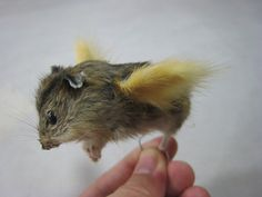 yes, when hamsters fly:p(this is going to come in so handy)