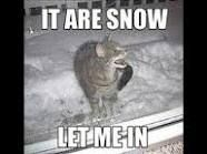 Help Help SNOW