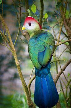 pretty colored bird~