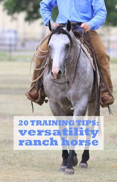 20 Training Tips for Versatility Ranch Horse from the AQHA Journal