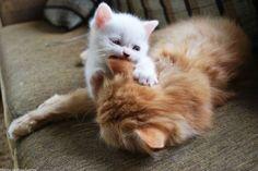 Jugando con mamá.,