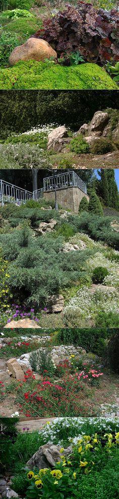6 правил выбора растений для рокария. Если вы в этом сезоне решили на с | Цветы | Постила