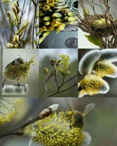 Spring Collage by Renée . Spring Scenery, Color Collage, Beautiful Collage, Colour Board, Mellow Yellow, Autumn Trees, Animal Design, Color Inspiration, Colour Schemes