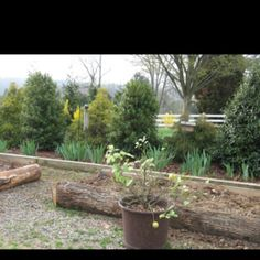 New raised beds at Dewberry Farm