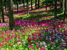 Fleurs dans la forêt jpg