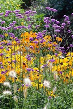 ╭⊰✿ The Romantic Cottage Garden ✿⊱╮Verbena bonariensis - great combo with Rudbeckia Prairie Garden, Garden Cottage, Flowers Perennials, Planting Flowers, Flower Plants, Beautiful Gardens, Beautiful Flowers, Landscape Design, Garden Design