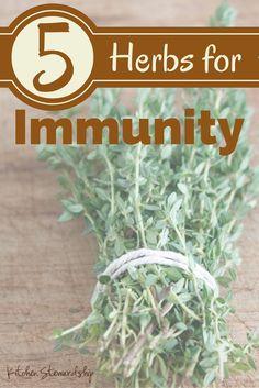 Top 5 Herbs for Boosting Immunity :: via Kitchen Stewardship | herbology, herbalism, healing plants, herbal medicine