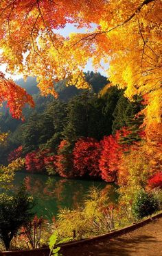 Lake Yamanaka in de buurt van Mount Fuji Yamanakako Japan Fall Pictures, Nature Pictures, Autumn Photos, Beautiful Nature Wallpaper, Beautiful Landscapes, Nature Architecture, Beautiful Places, Beautiful Pictures, Trees Beautiful