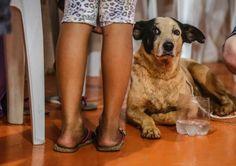 Tratado como herói, cão ajuda a salvar criança soterrada após rompimento de barragem em MG