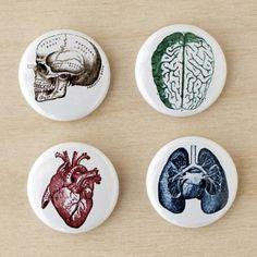 Vintage anatomy pins.