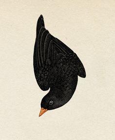 Blackbird detail.