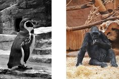 Zvířara a wildlife