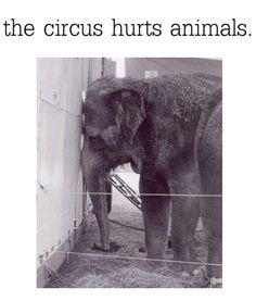 You couldn't pay me to go to a circus, unless it is Cirque du Soleil, which does not use (and abuse!) animals.