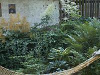 Stinný trvalkový záhon - kapradiny, udatny, bohyšky, kypreje